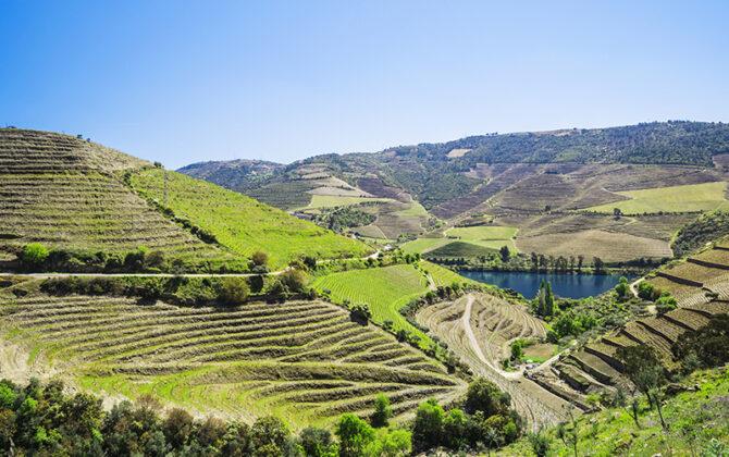 EFP Biotek: Douro Valley Grape Seed Oil