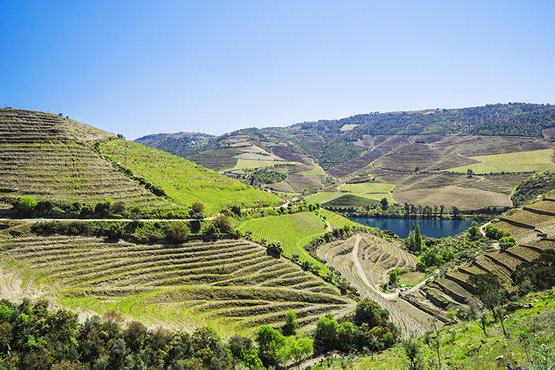 EFP Biotek: Douro Valley Grape Seed Oil